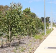 Camden Valley Way Upgrade