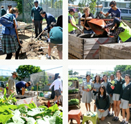 Brentwood Secondary College Community Garden