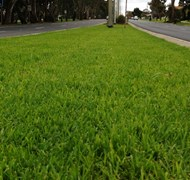 Bendigo Median Strips back to green