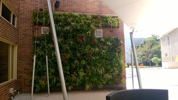 Bradfield courtyard greenwalls