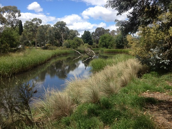 Banksia St O'Connor wetland