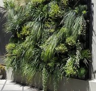 Courtyard vertical garden